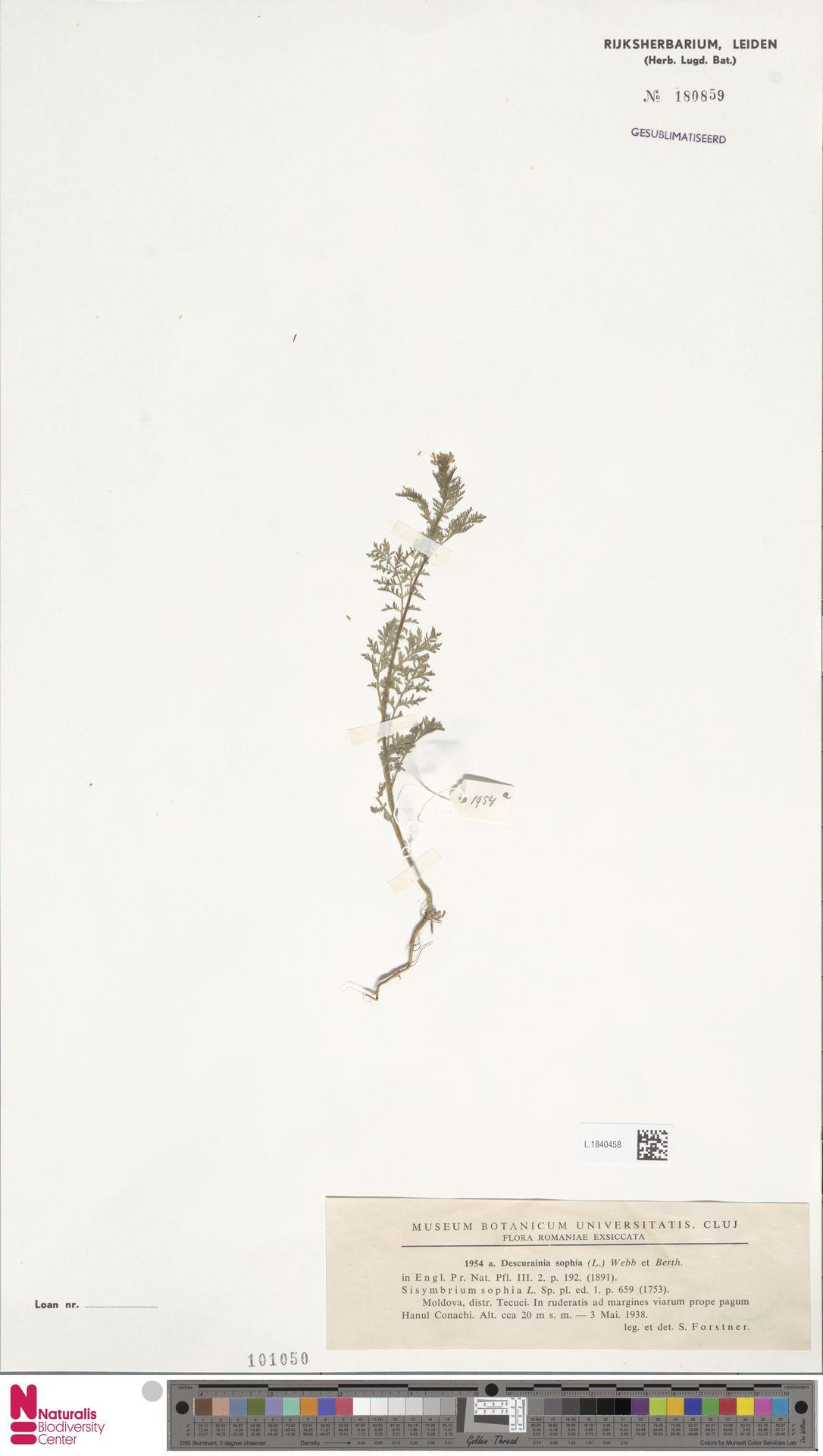 L.1840458   Descurainia sophia (L.) Webb ex Prantl