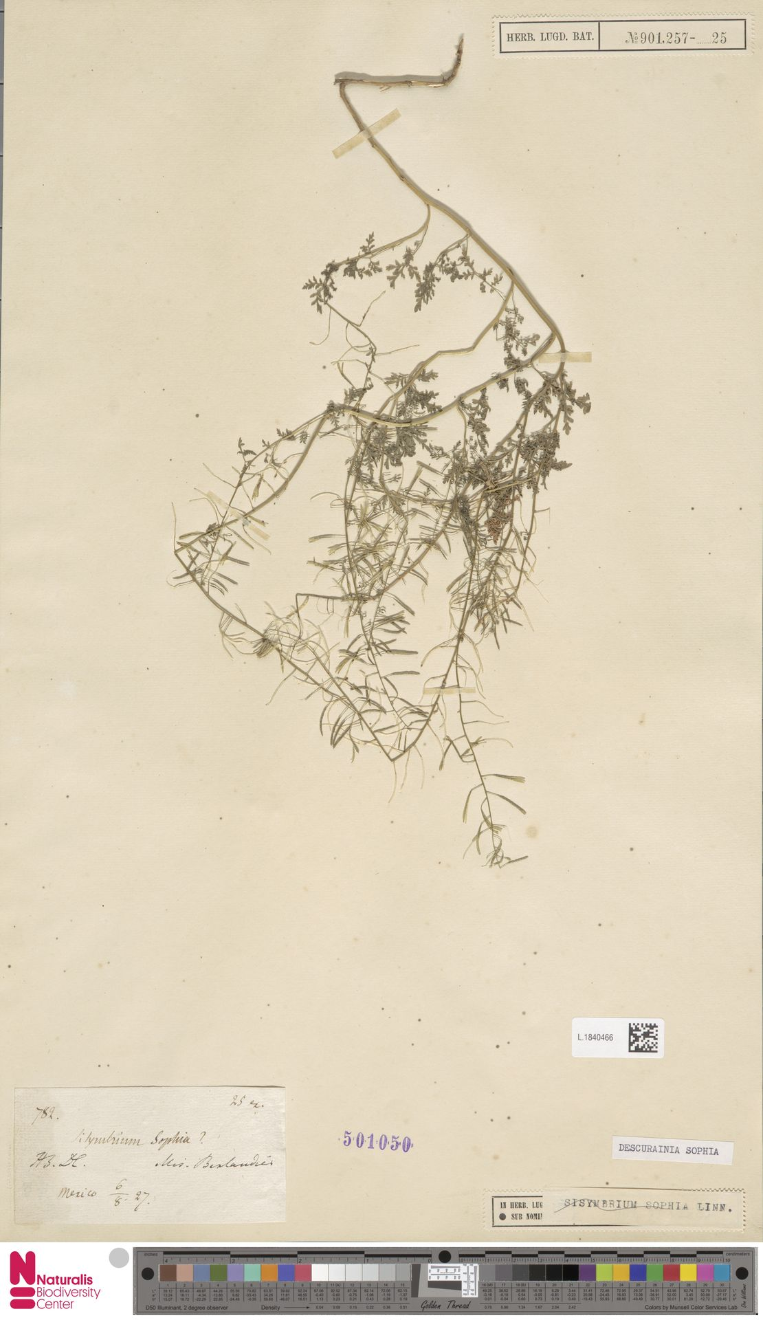 L.1840466 | Descurainia sophia (L.) Webb ex Prantl