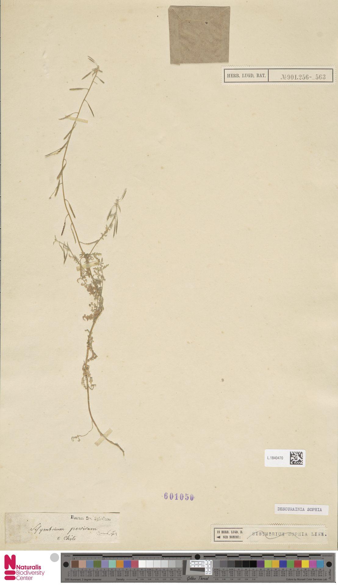 L.1840470 | Descurainia sophia (L.) Webb ex Prantl