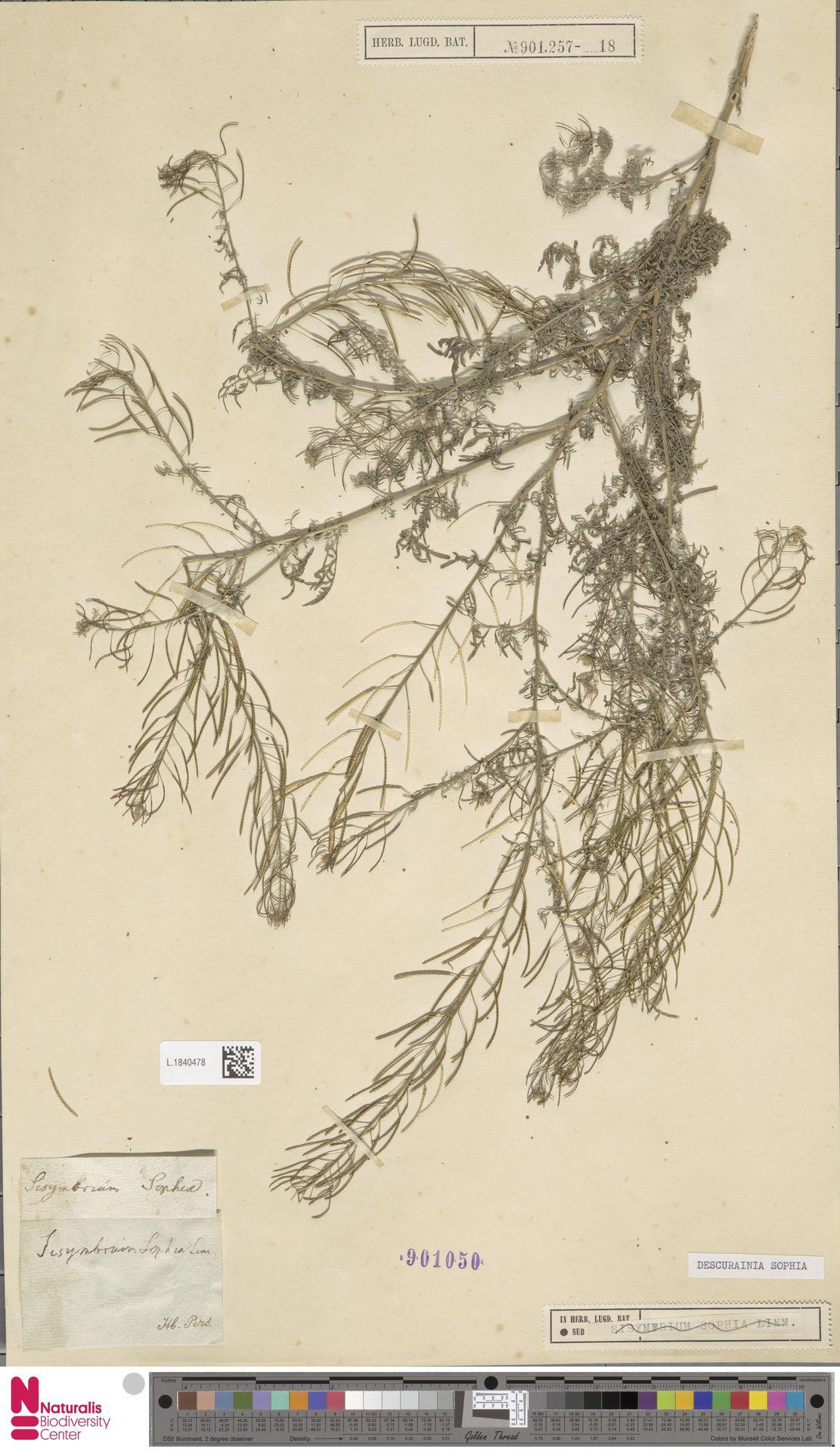 L.1840478 | Descurainia sophia (L.) Webb ex Prantl