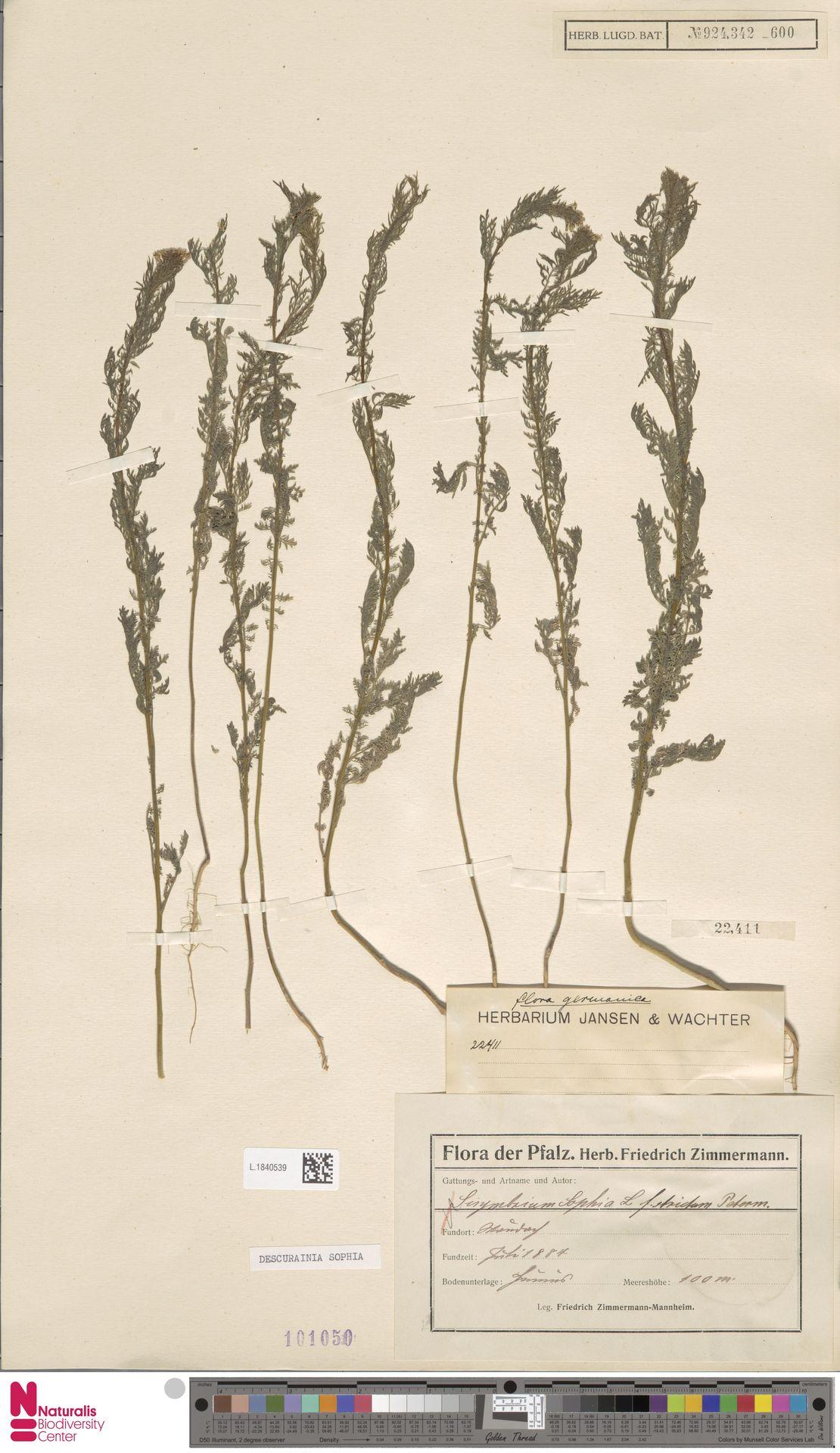 L.1840539 | Descurainia sophia (L.) Webb ex Prantl