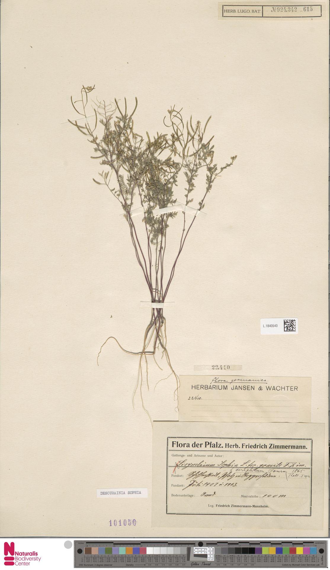 L.1840540 | Descurainia sophia (L.) Webb ex Prantl
