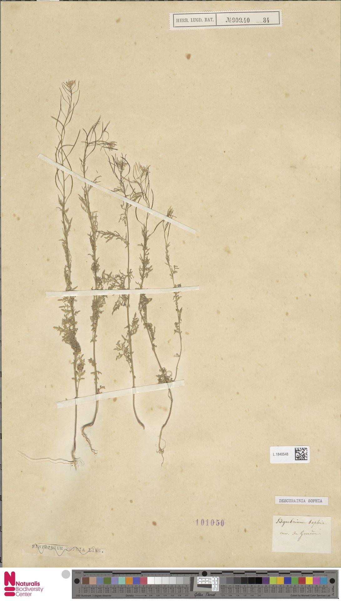 L.1840548 | Descurainia sophia (L.) Webb ex Prantl