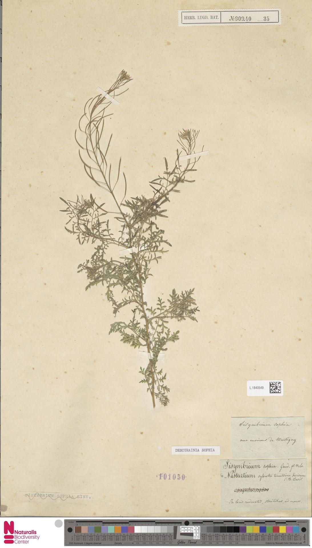 L.1840549 | Descurainia sophia (L.) Webb ex Prantl