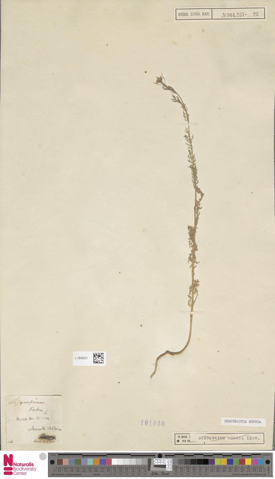 L.1840551 | Descurainia sophia (L.) Webb ex Prantl