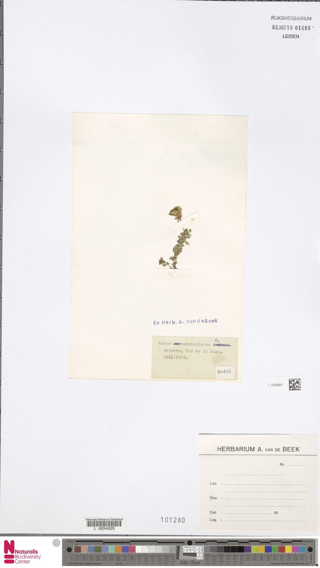 L.1938861 | Lotus corniculatus L.
