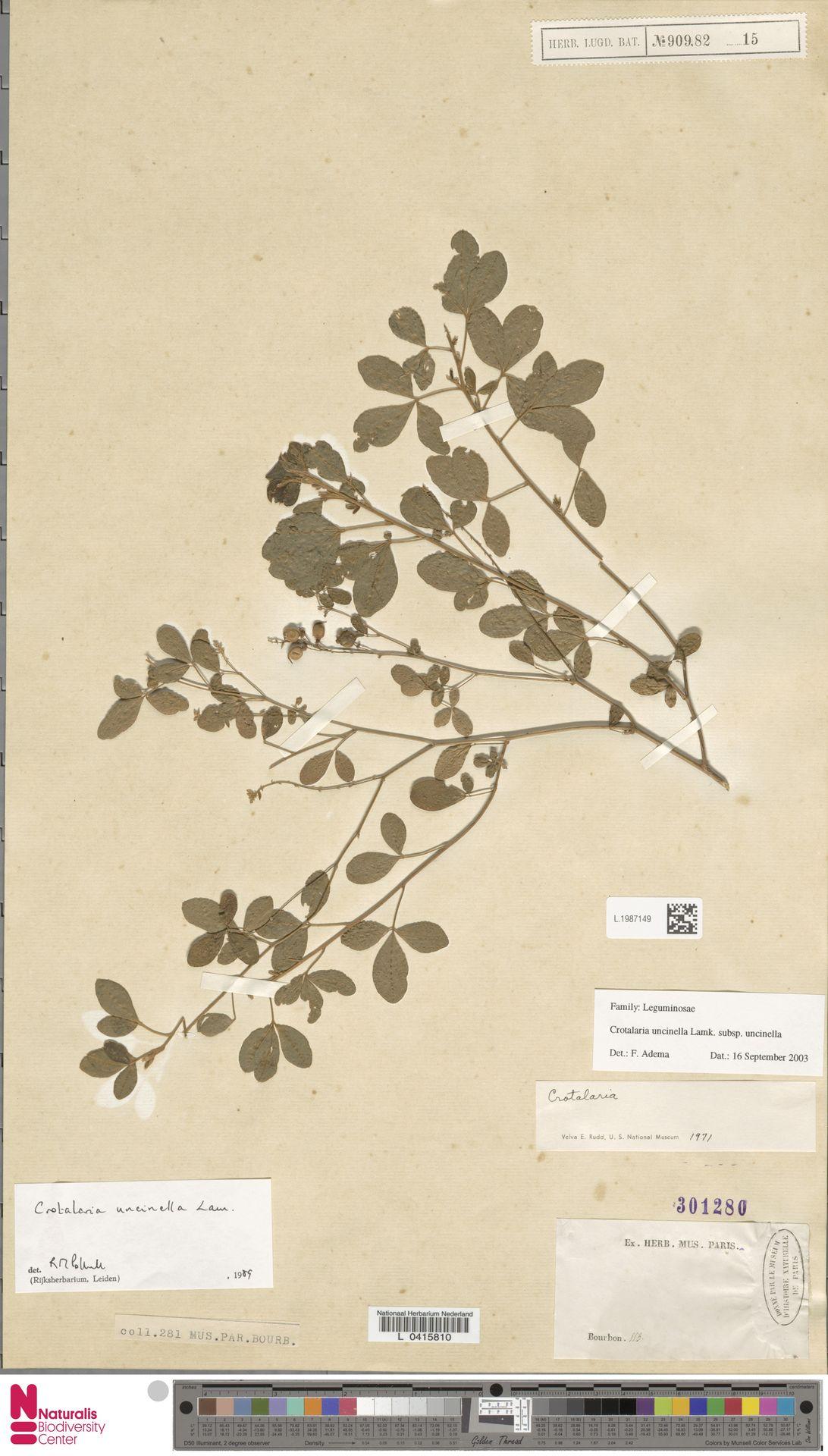 L.1987149 | Crotalaria uncinella subsp. uncinella