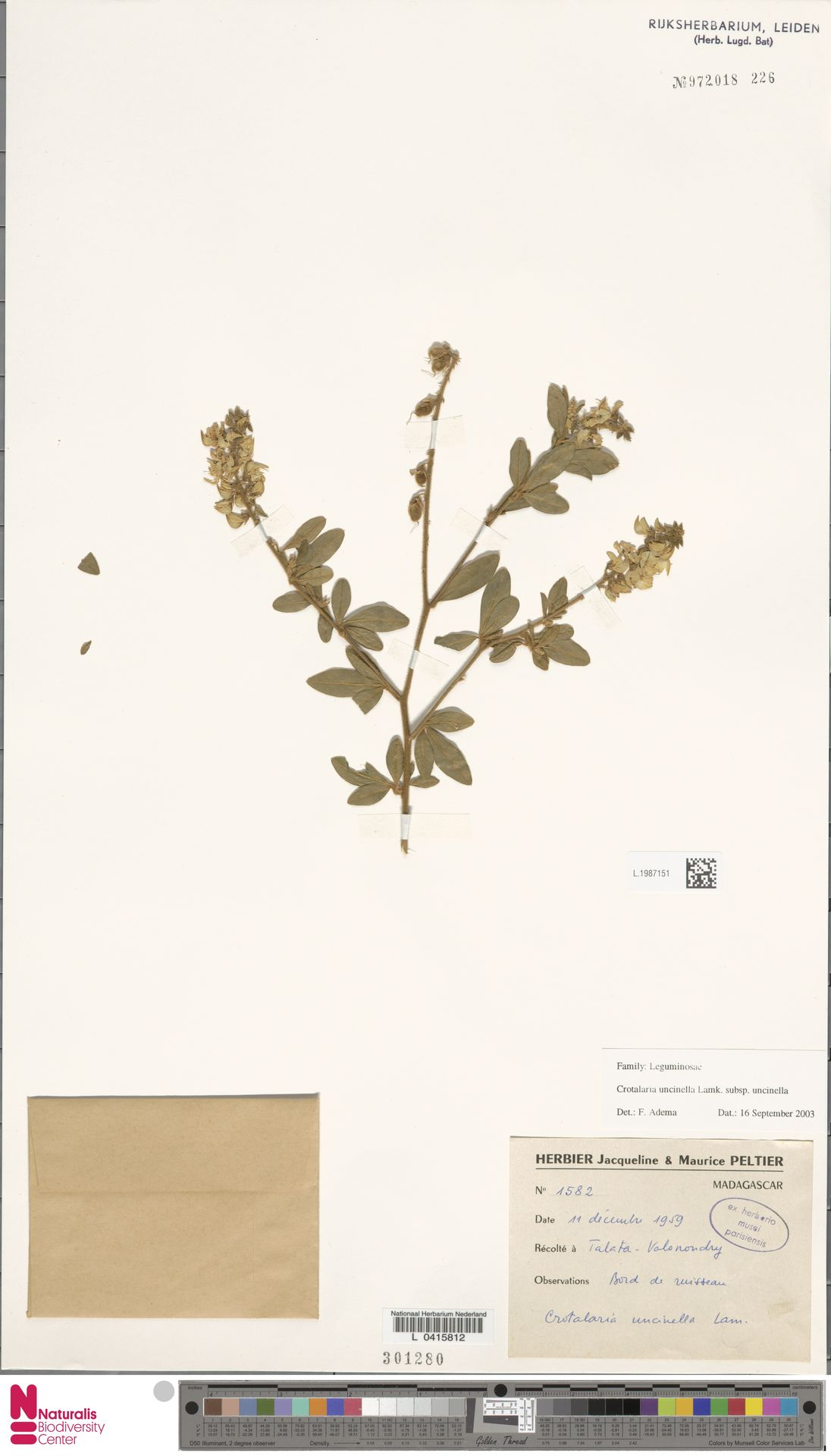 L.1987151 | Crotalaria uncinella subsp. uncinella