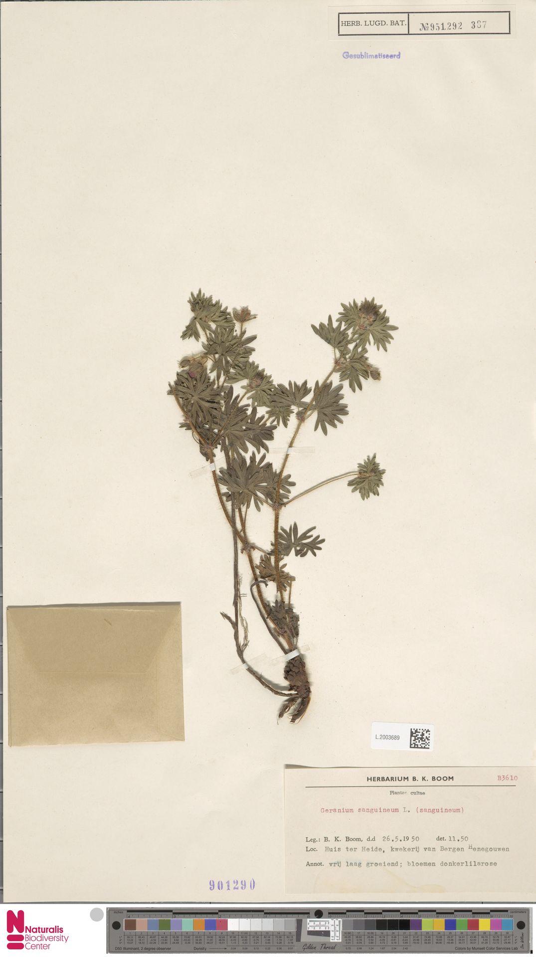 L.2003689 | Geranium sanguineum L.