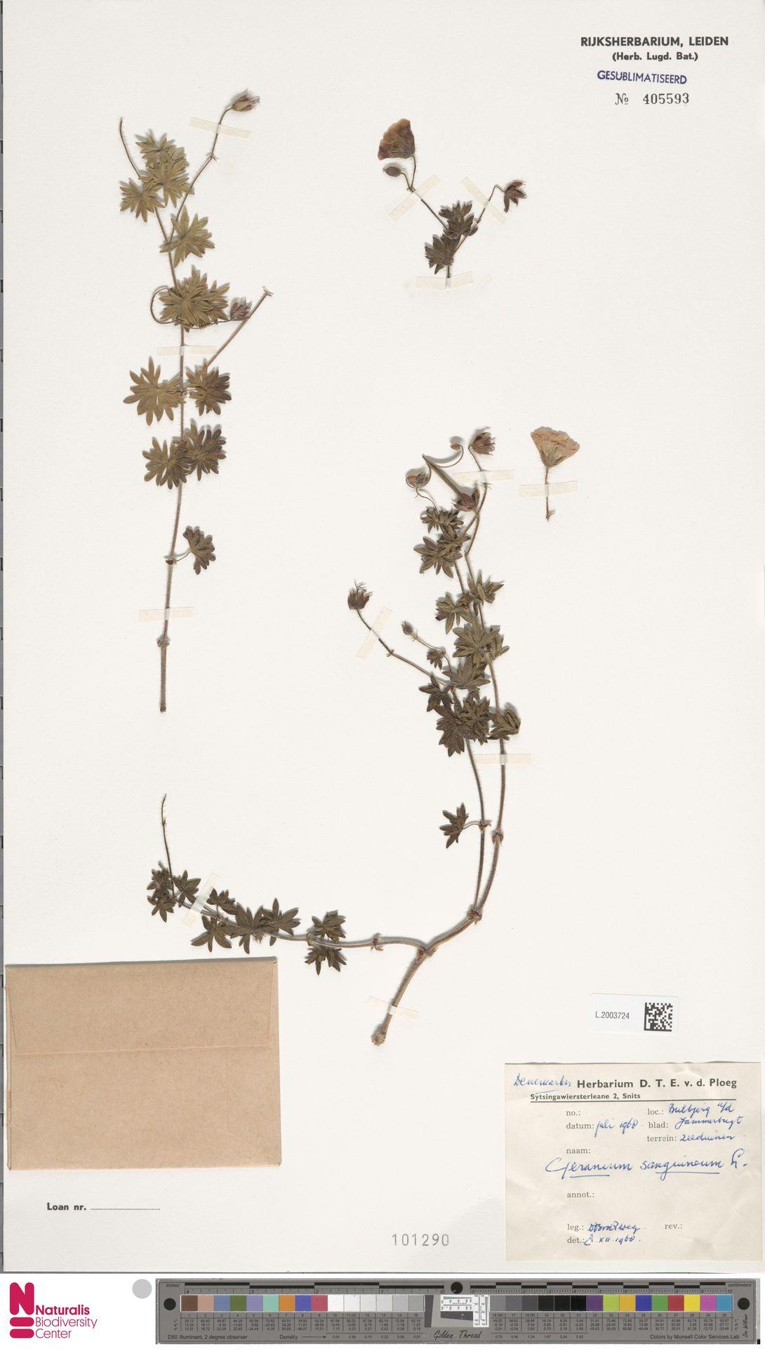 L.2003724 | Geranium sanguineum L.