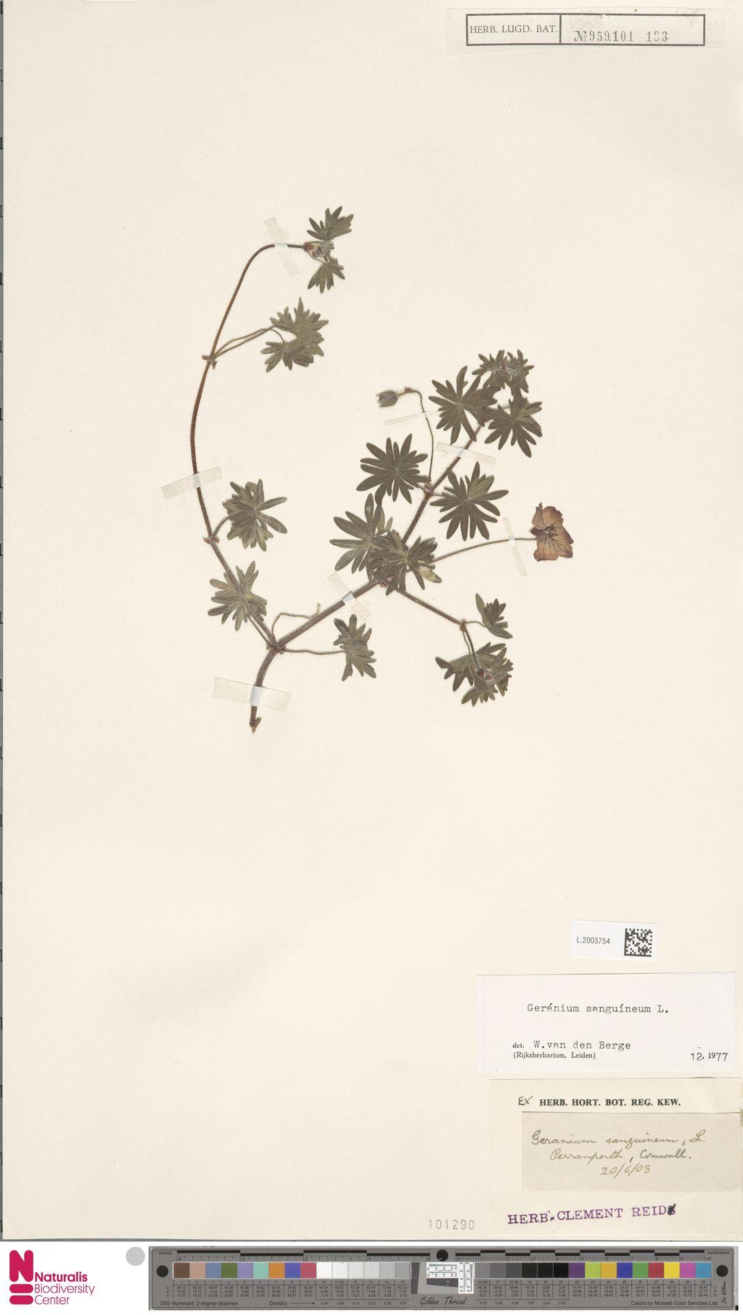 L.2003754 | Geranium sanguineum L.