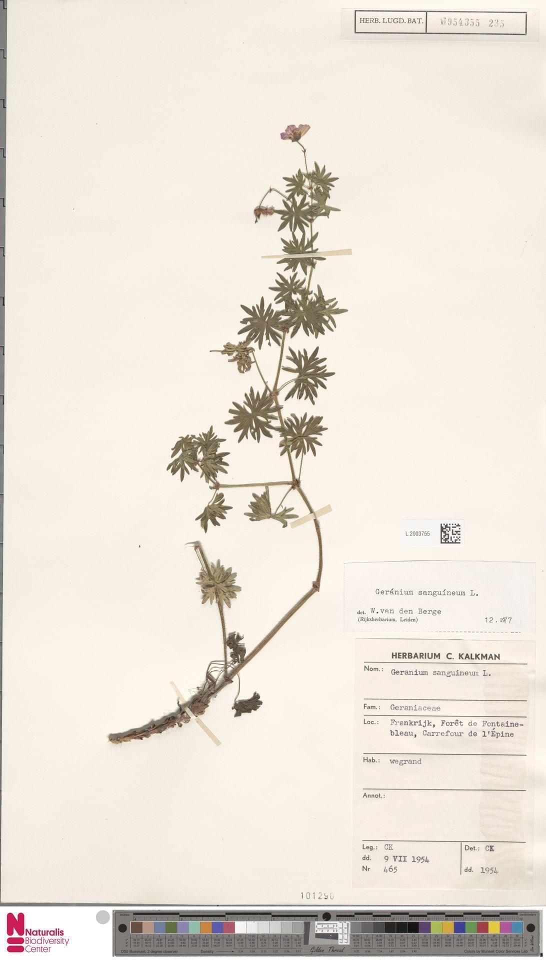 L.2003755 | Geranium sanguineum L.