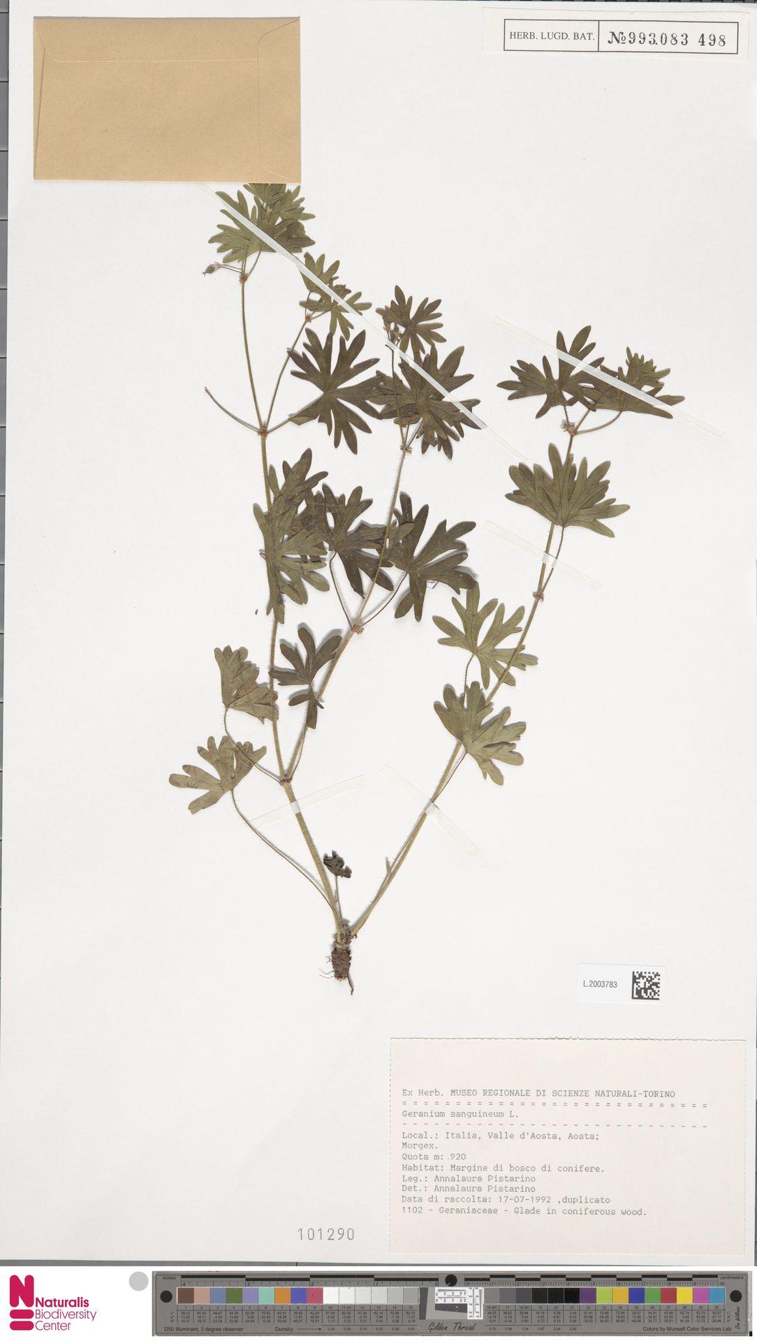 L.2003783 | Geranium sanguineum L.
