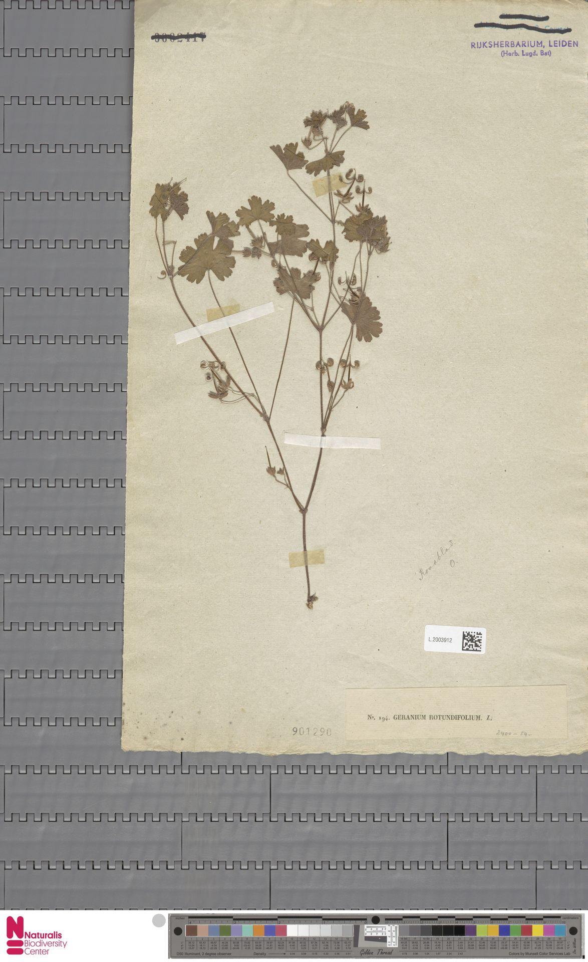 L.2003912 | Geranium rotundifolium L.