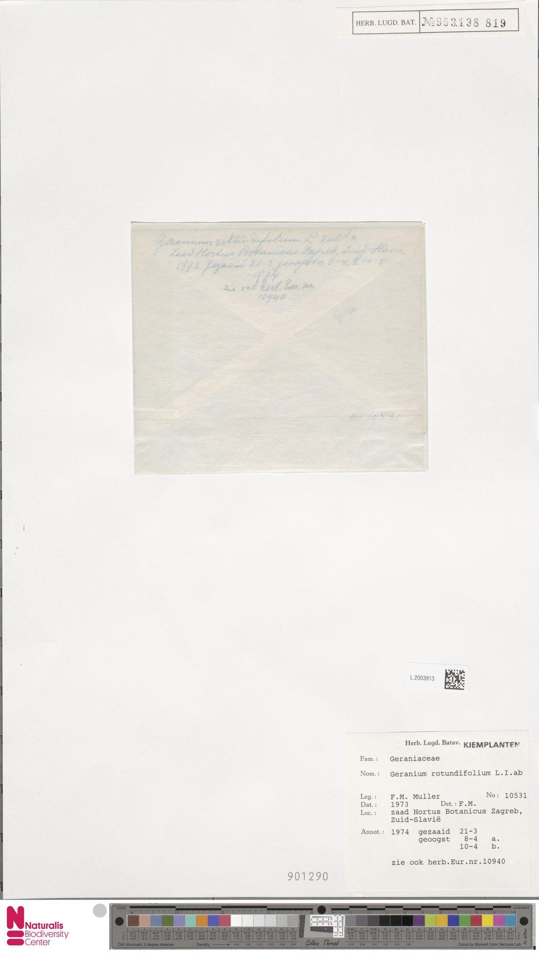 L.2003913   Geranium rotundifolium L.