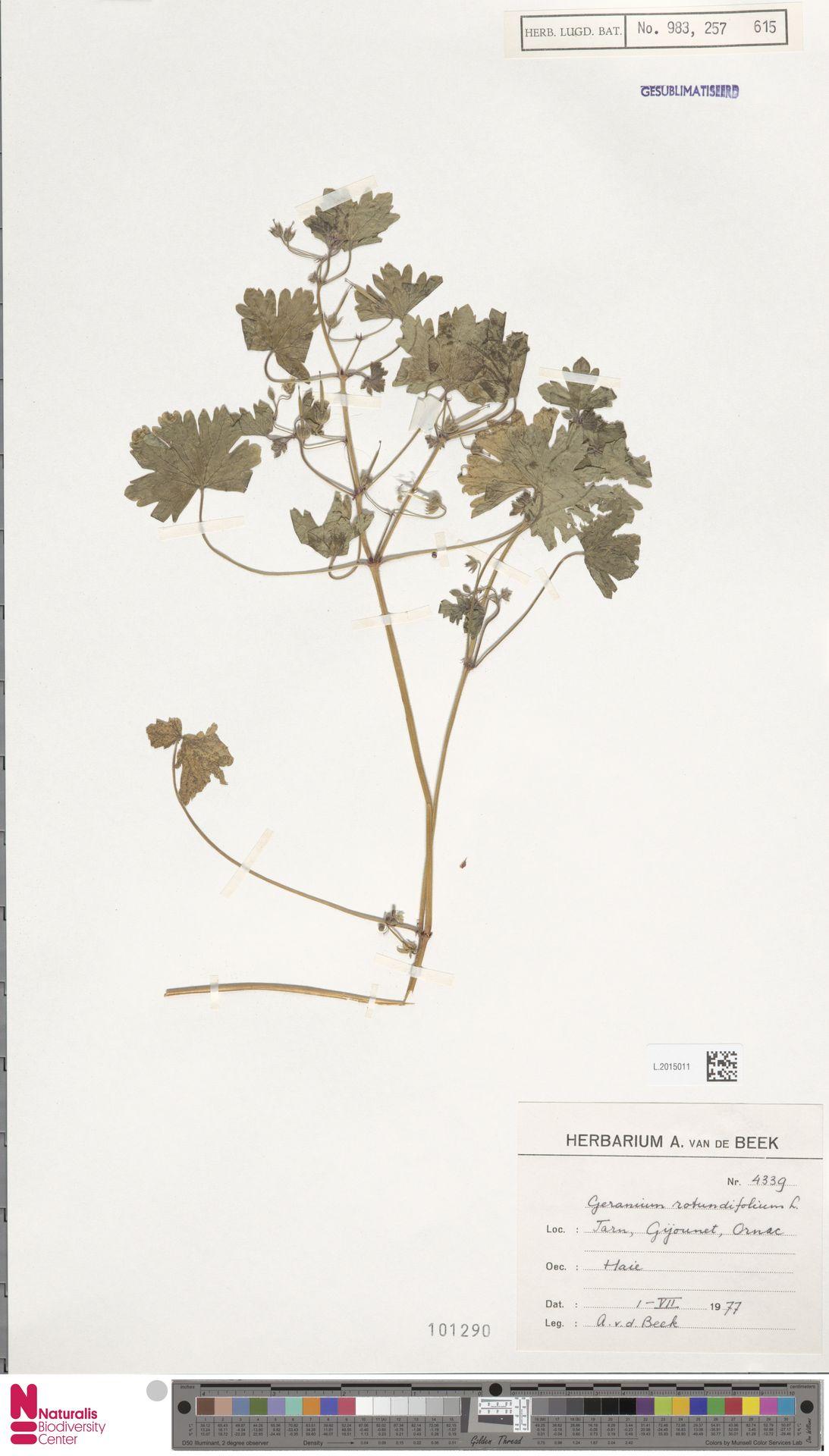 L.2015011 | Geranium rotundifolium L.