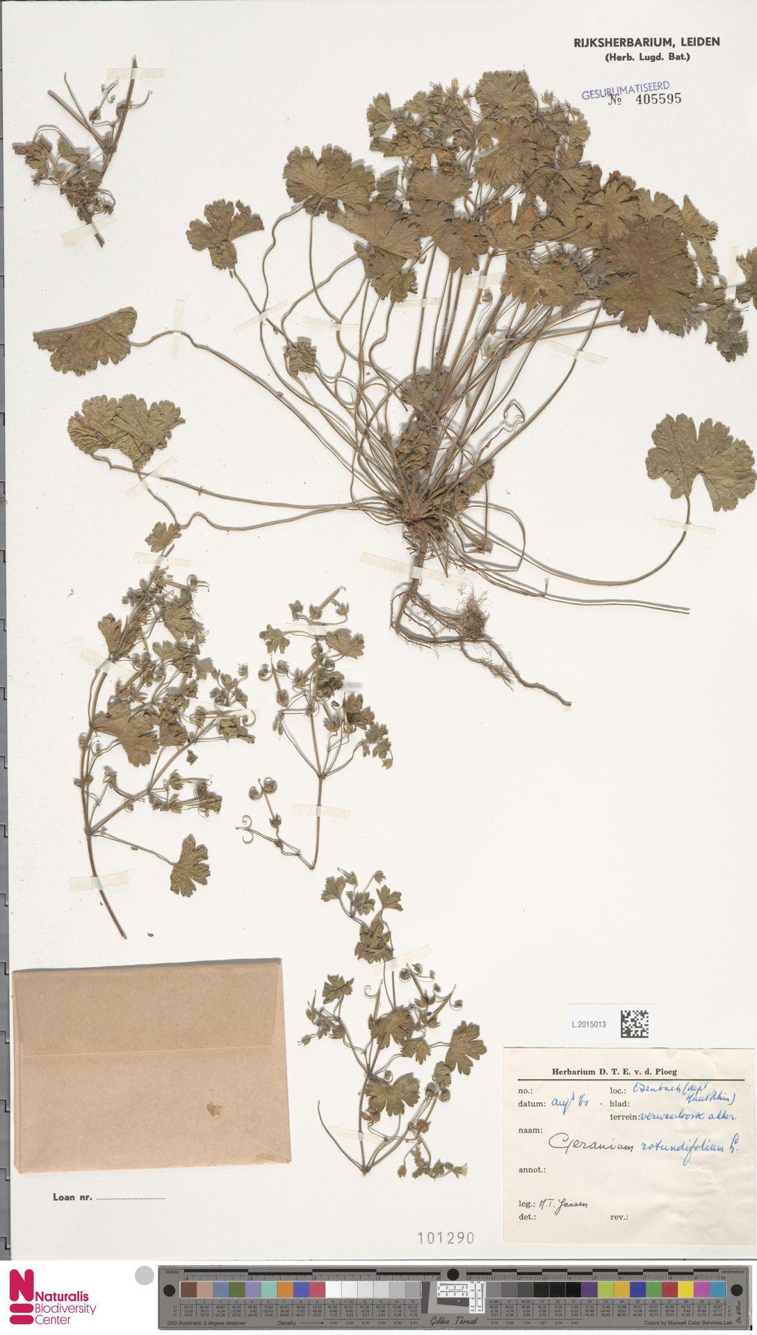 L.2015013 | Geranium rotundifolium L.