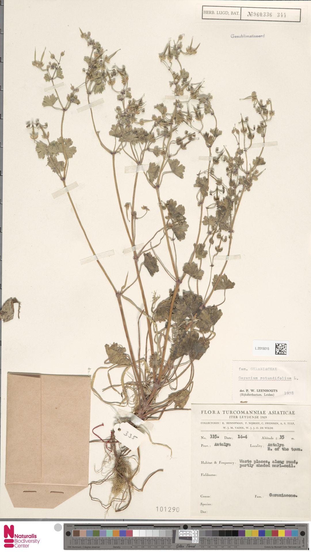 L.2015015 | Geranium rotundifolium L.