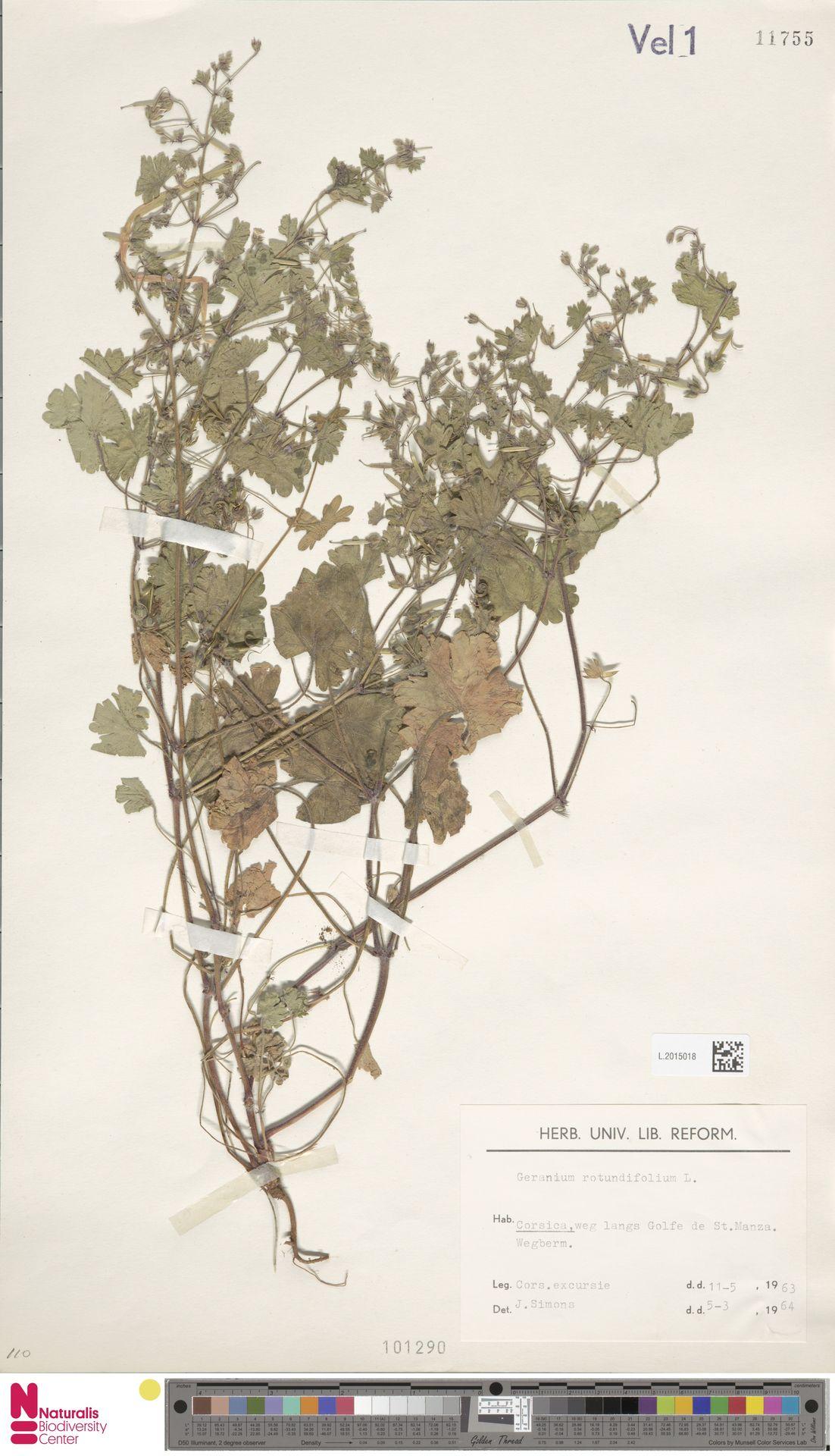 L.2015018 | Geranium rotundifolium L.