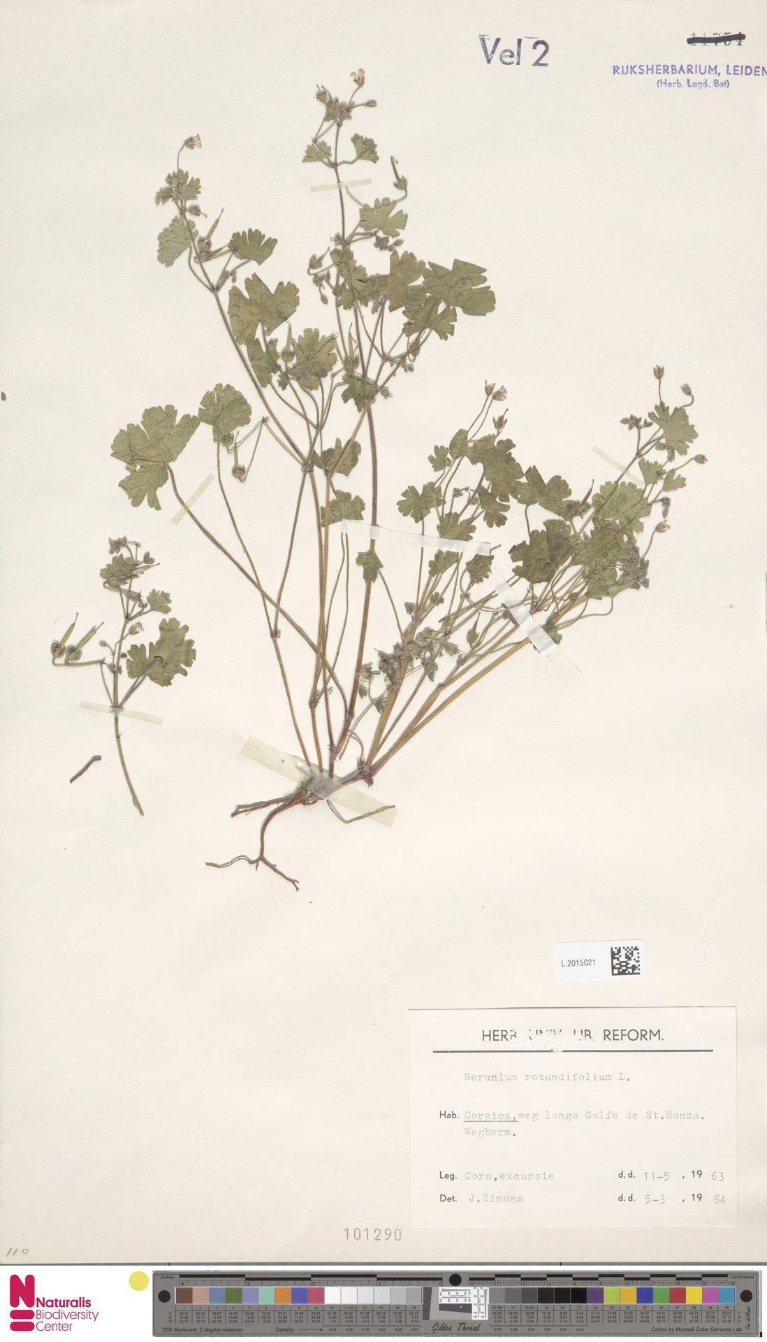 L.2015021 | Geranium rotundifolium L.