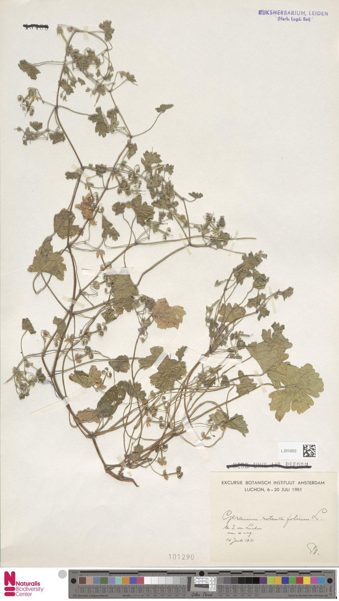 L.2015022 | Geranium rotundifolium L.