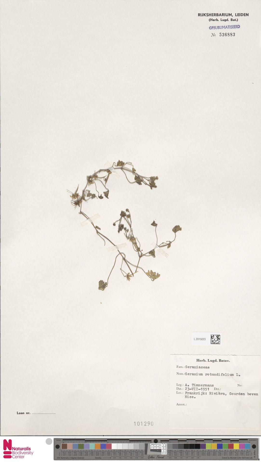 L.2015023 | Geranium rotundifolium L.