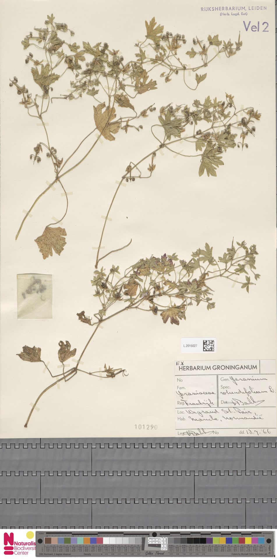 L.2015027 | Geranium rotundifolium L.