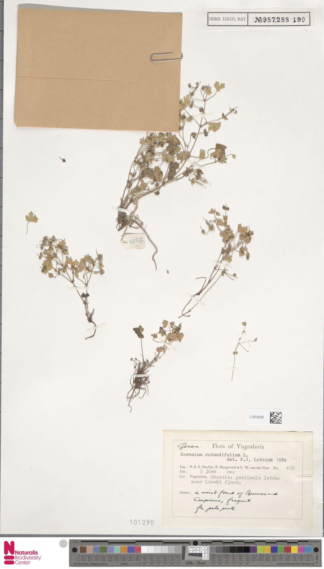 L.2015030 | Geranium rotundifolium L.