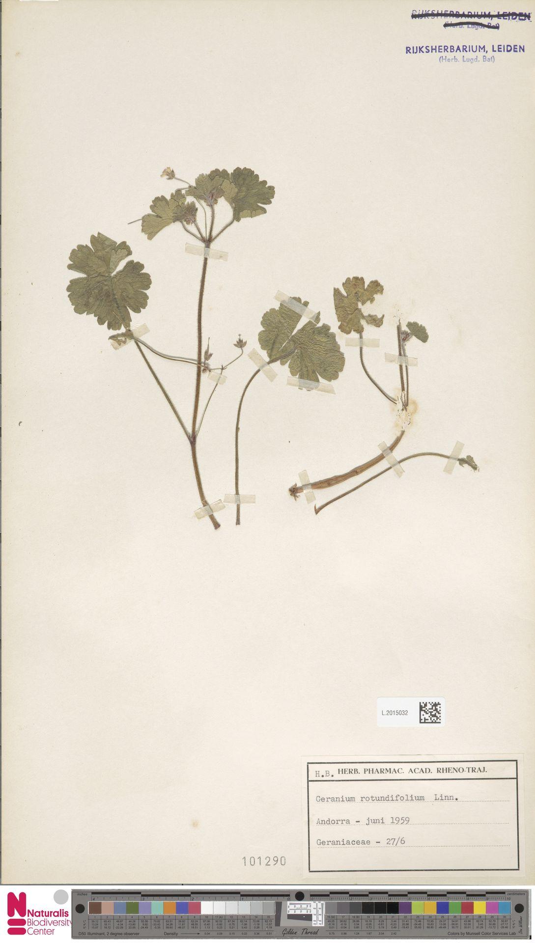 L.2015032 | Geranium rotundifolium L.