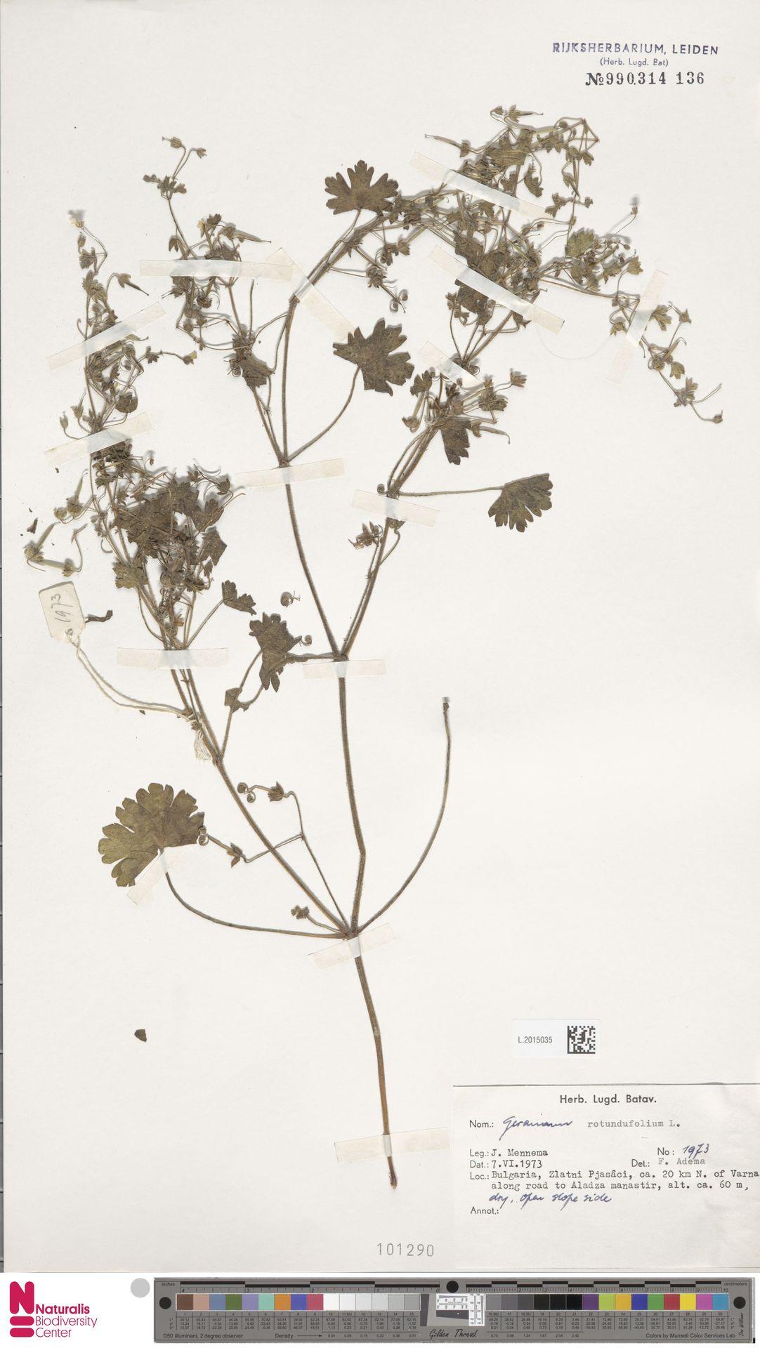 L.2015035 | Geranium rotundifolium L.