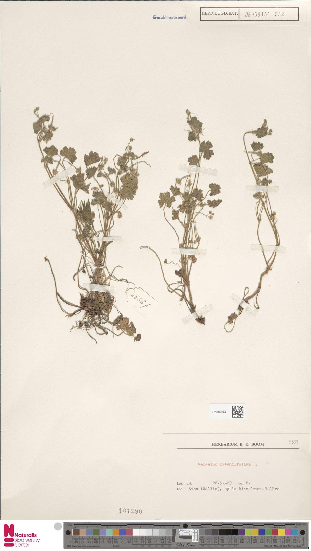L.2015044 | Geranium rotundifolium L.