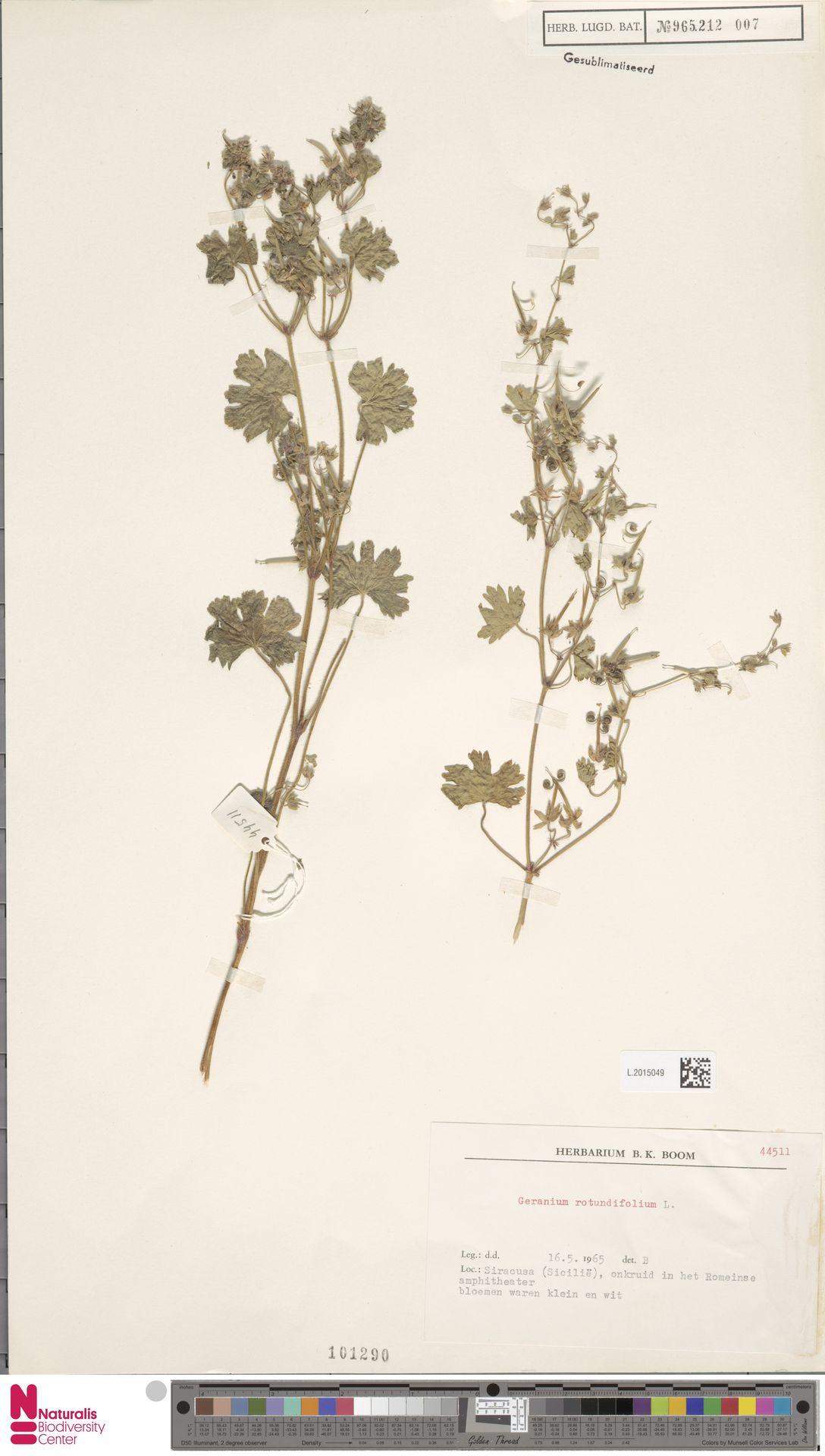L.2015049   Geranium rotundifolium L.