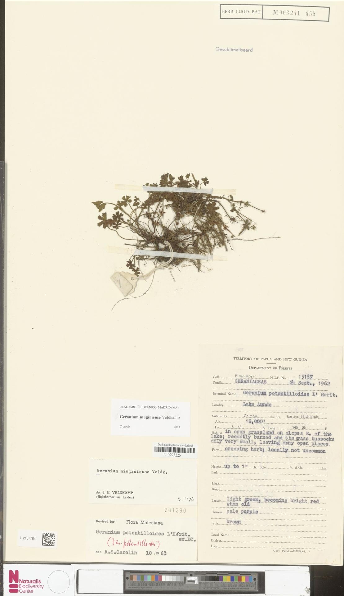 L.2107764 | Geranium niuginiense Veldkamp