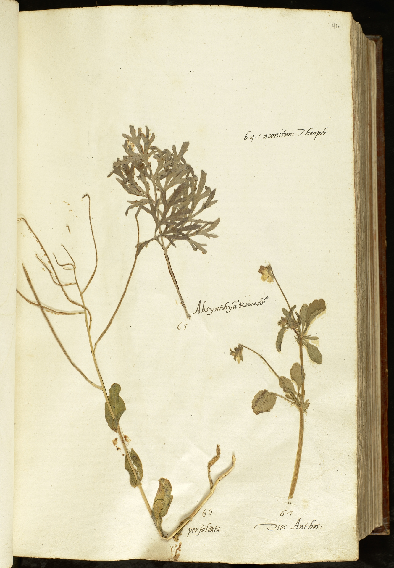 L.2110879 | Artemisia absinthium L.