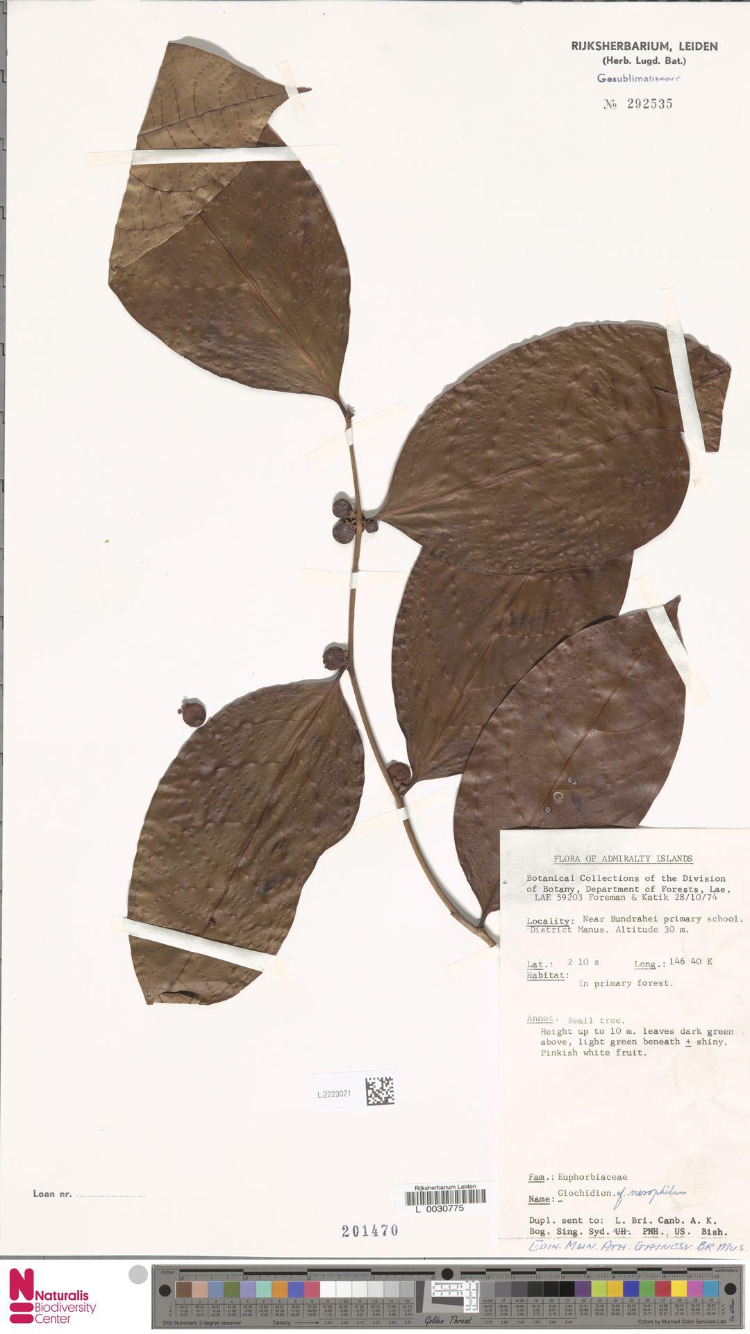 L.2223021 | Glochidion nesophilum Airy Shaw