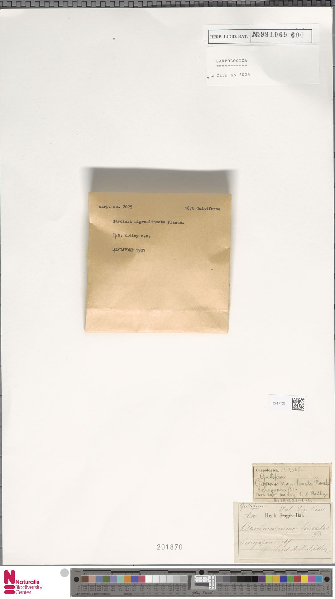 L.2417121 | Garcinia nigrolineata Planch. ex T.Anderson