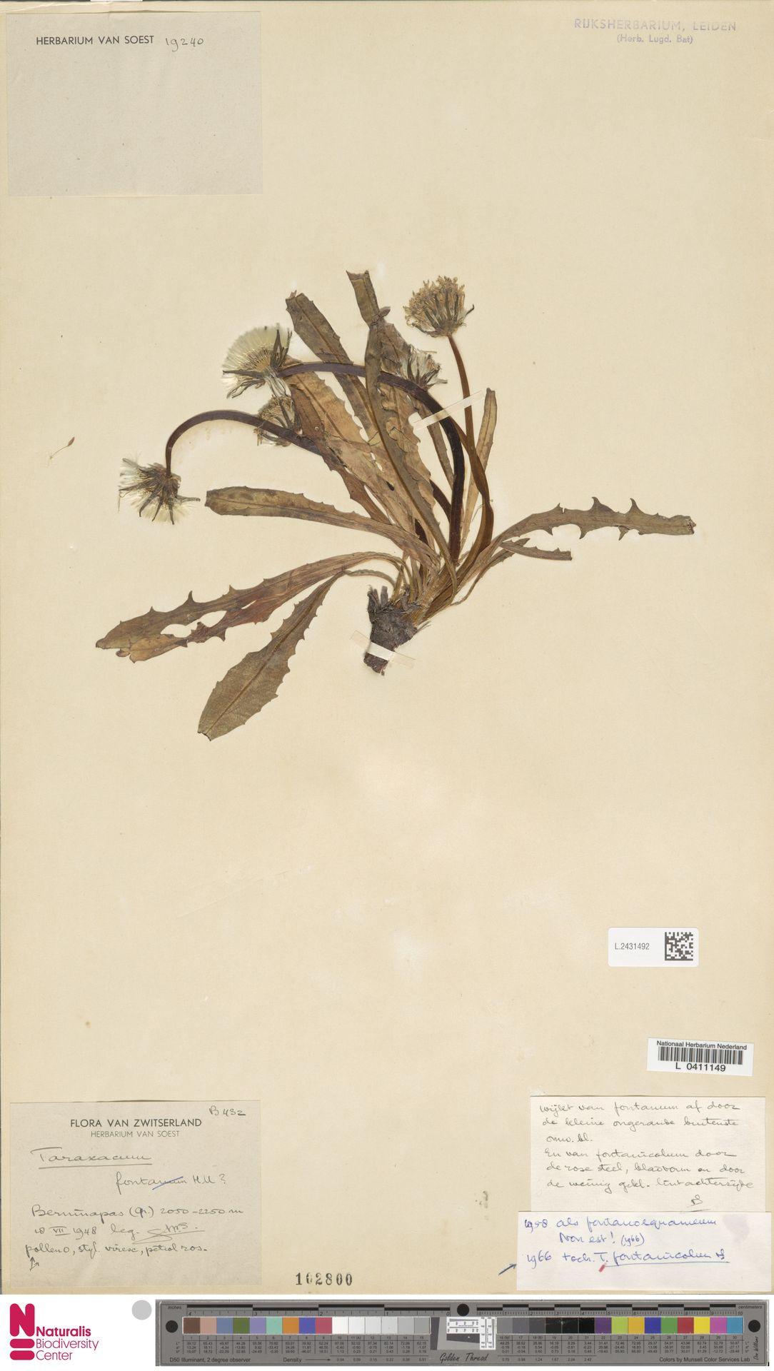 L.2431492 | Taraxacum fontanicola Soest