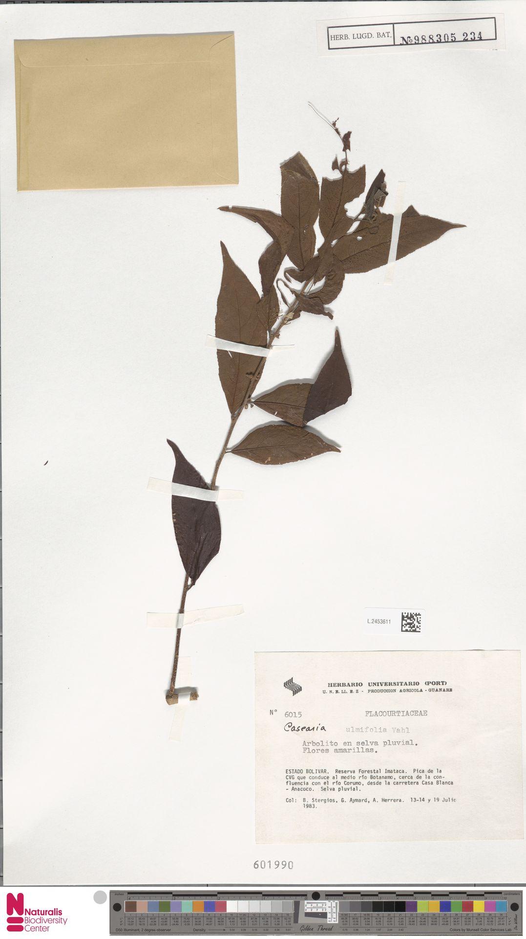 L.2453611 | Casearia ulmifolia Vahl ex Vent.