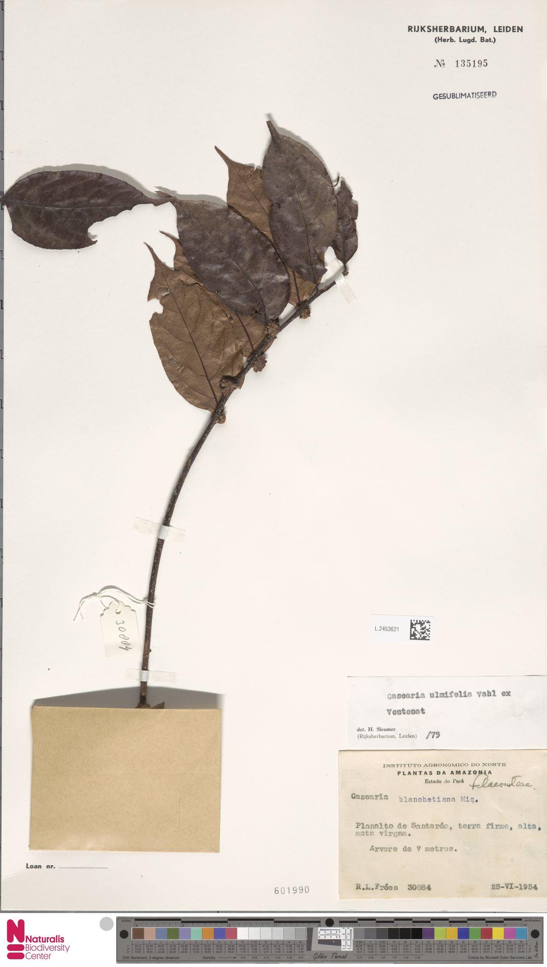L.2453621 | Casearia ulmifolia Vahl ex Vent.