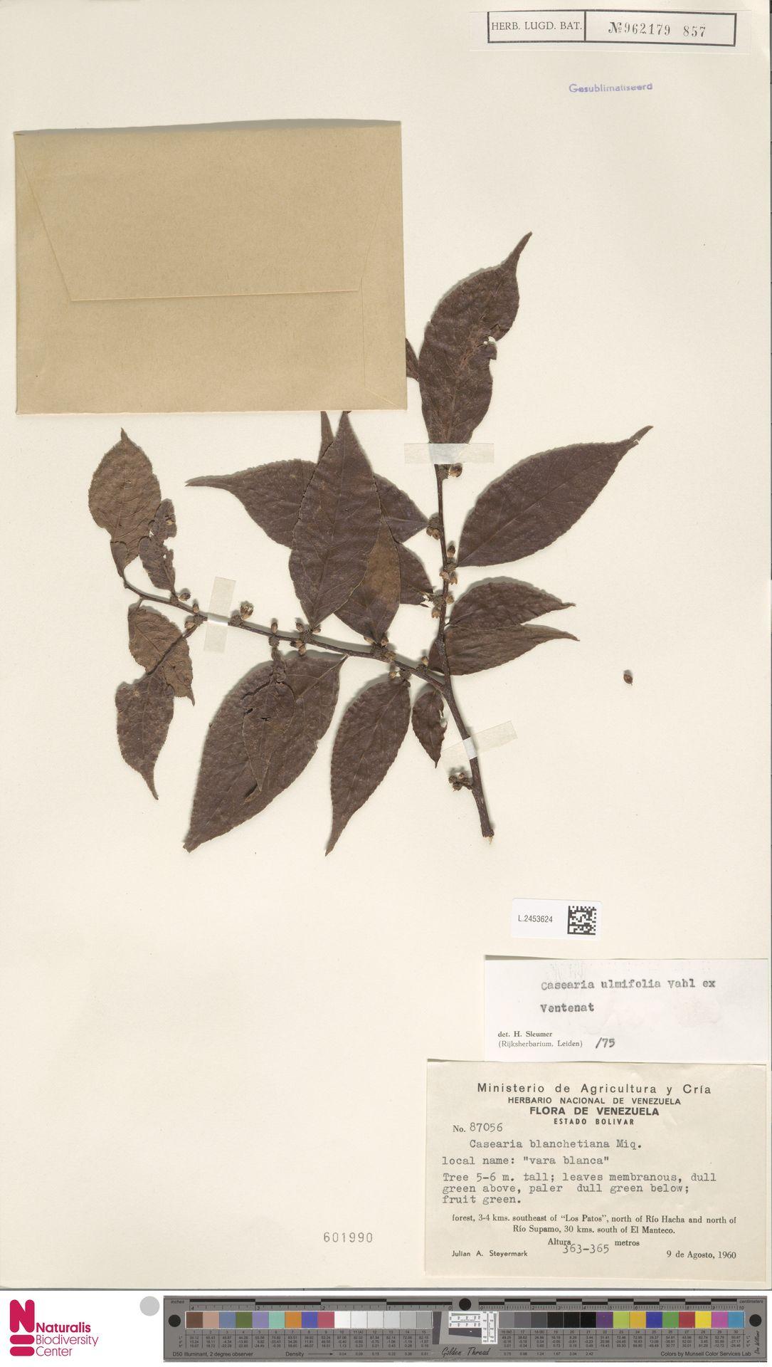 L.2453624 | Casearia ulmifolia Vahl ex Vent.