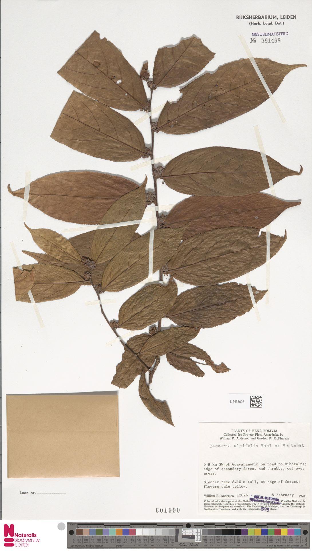 L.2453626 | Casearia ulmifolia Vahl ex Vent.