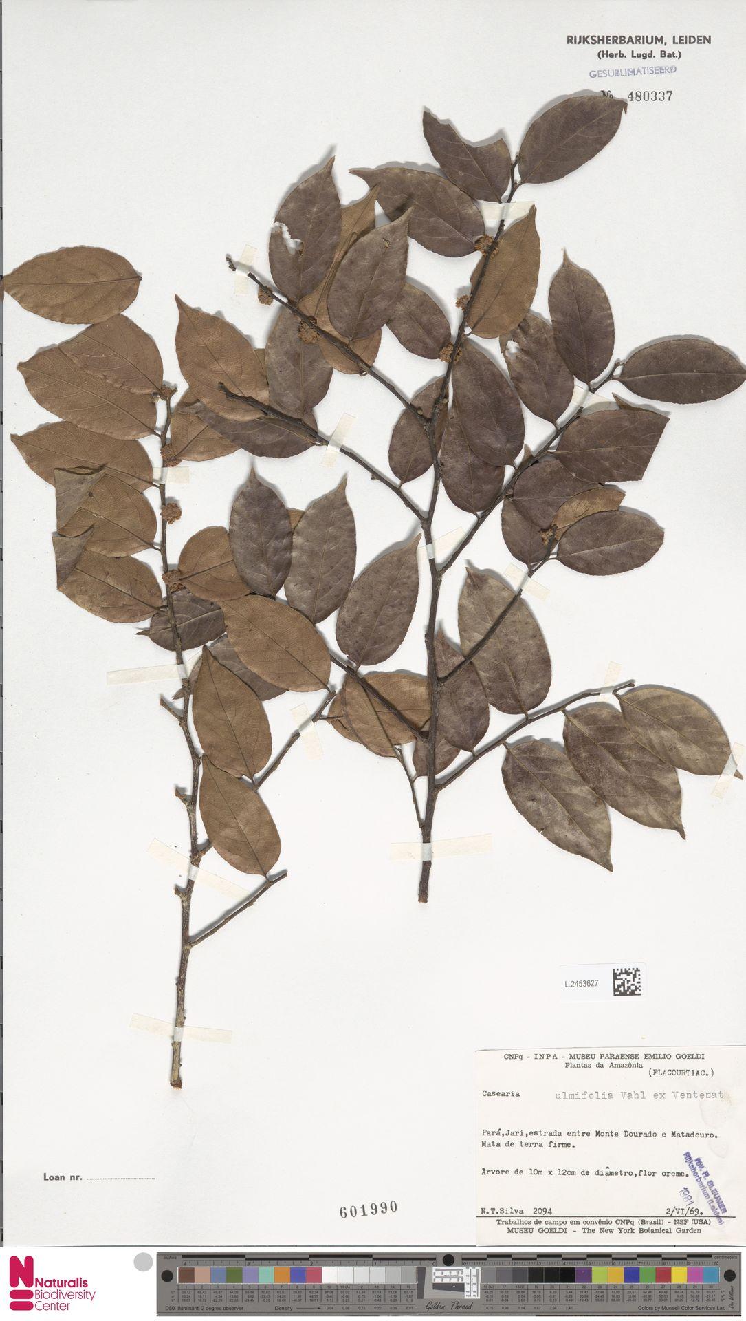 L.2453627 | Casearia ulmifolia Vahl ex Vent.