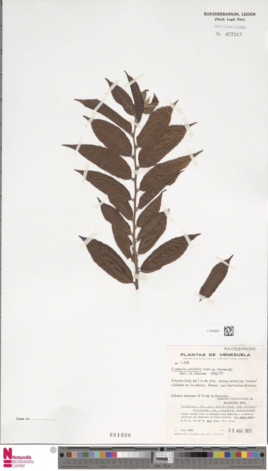 L.2453628 | Casearia ulmifolia Vahl ex Vent.