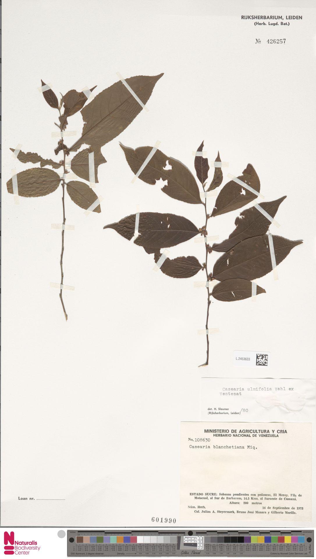 L.2453633 | Casearia ulmifolia Vahl ex Vent.