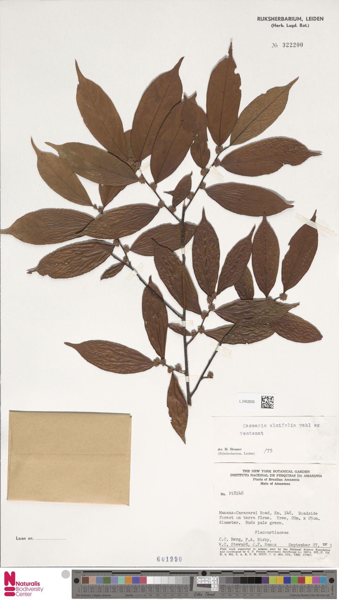 L.2453635 | Casearia ulmifolia Vahl ex Vent.