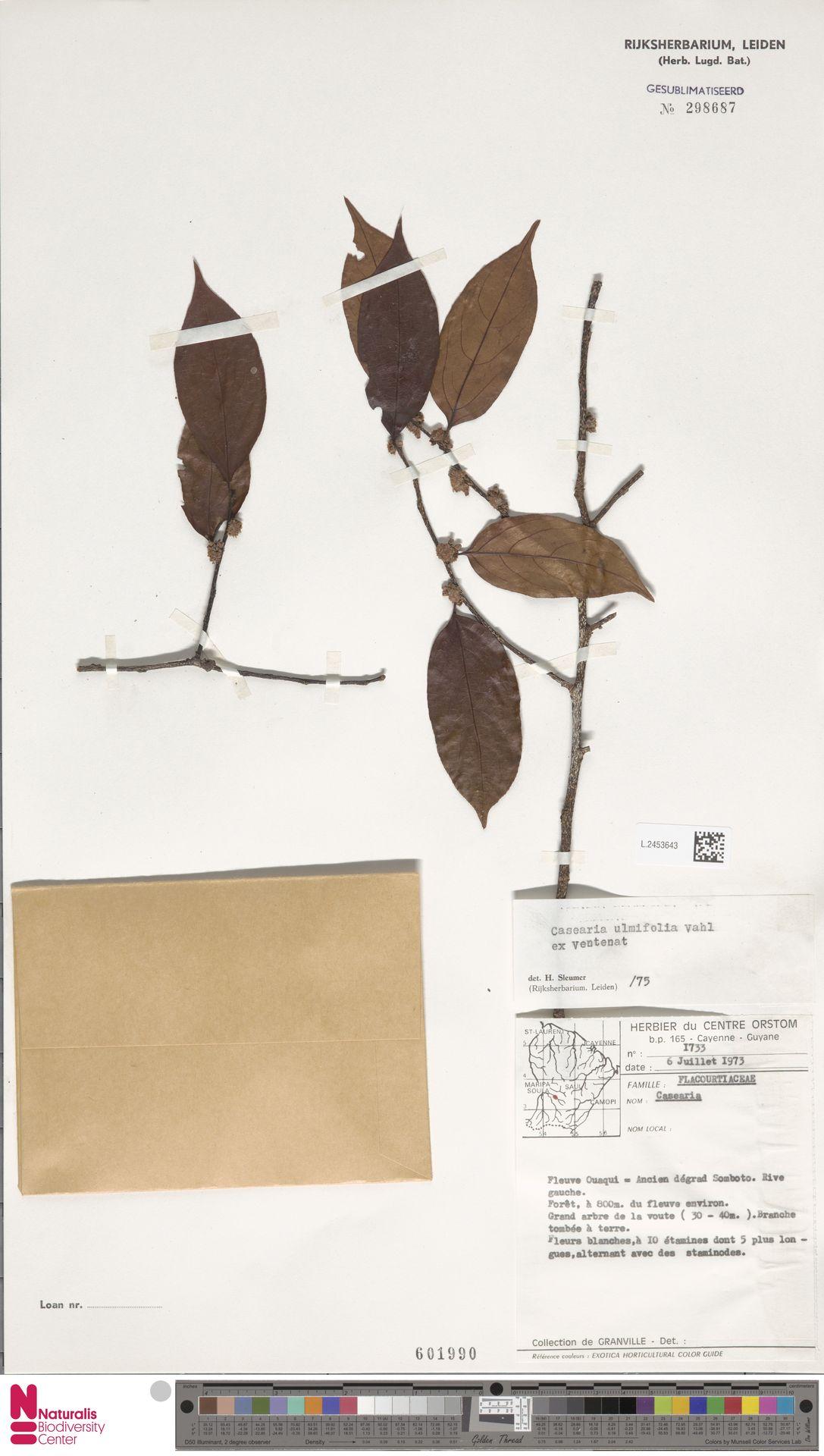 L.2453643 | Casearia ulmifolia Vahl ex Vent.