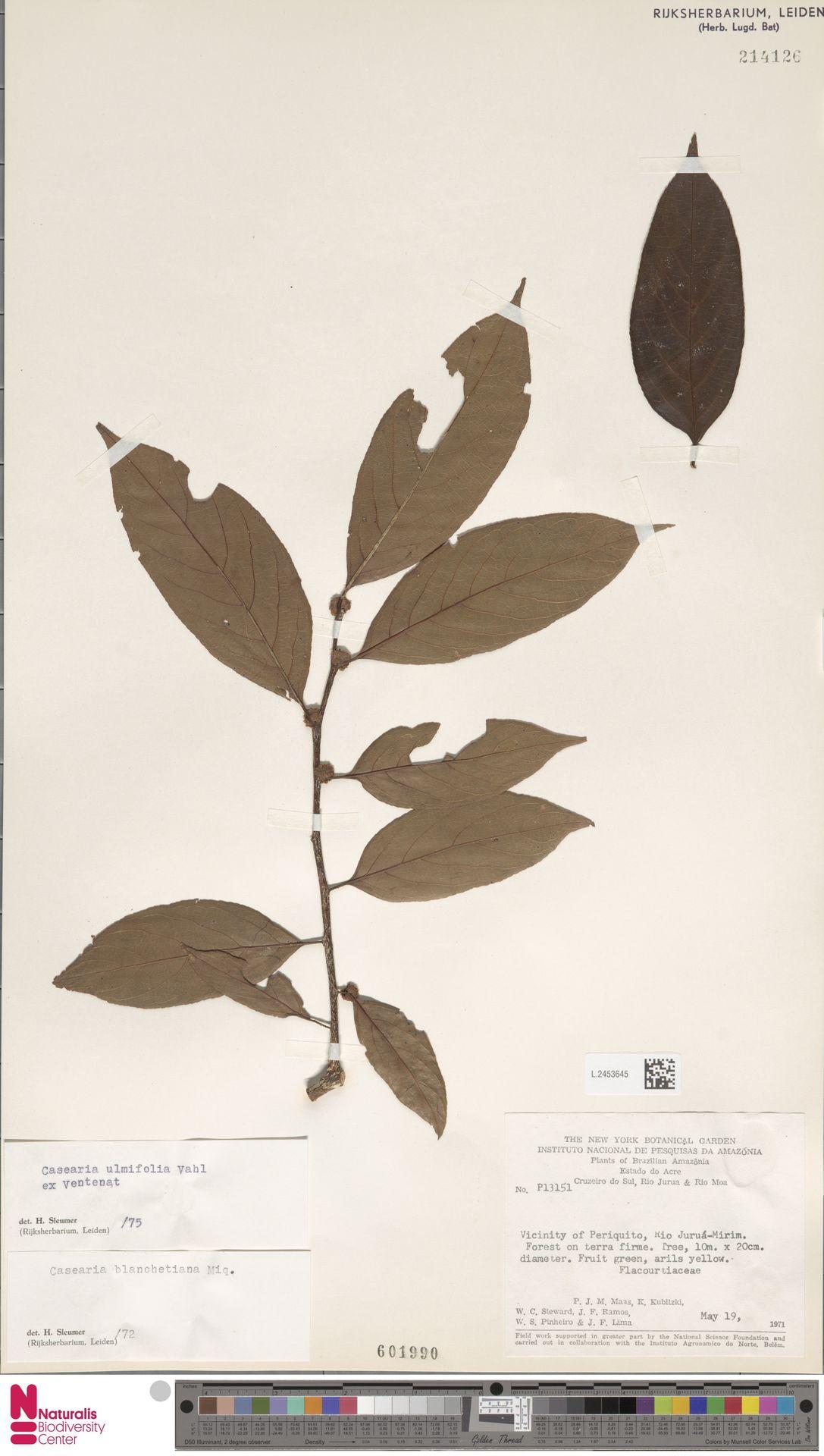 L.2453645 | Casearia ulmifolia Vahl ex Vent.