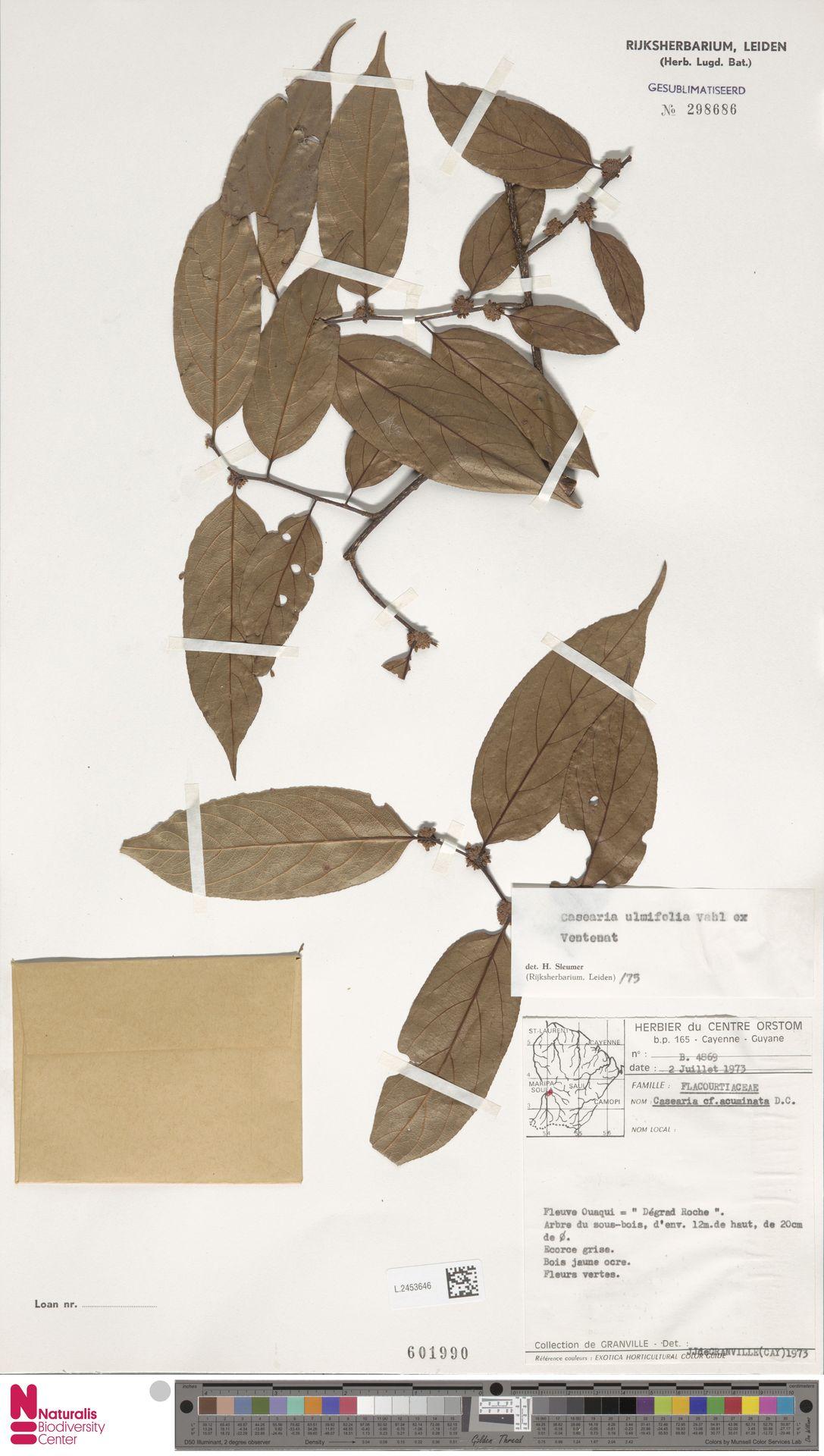 L.2453646 | Casearia ulmifolia Vahl ex Vent.