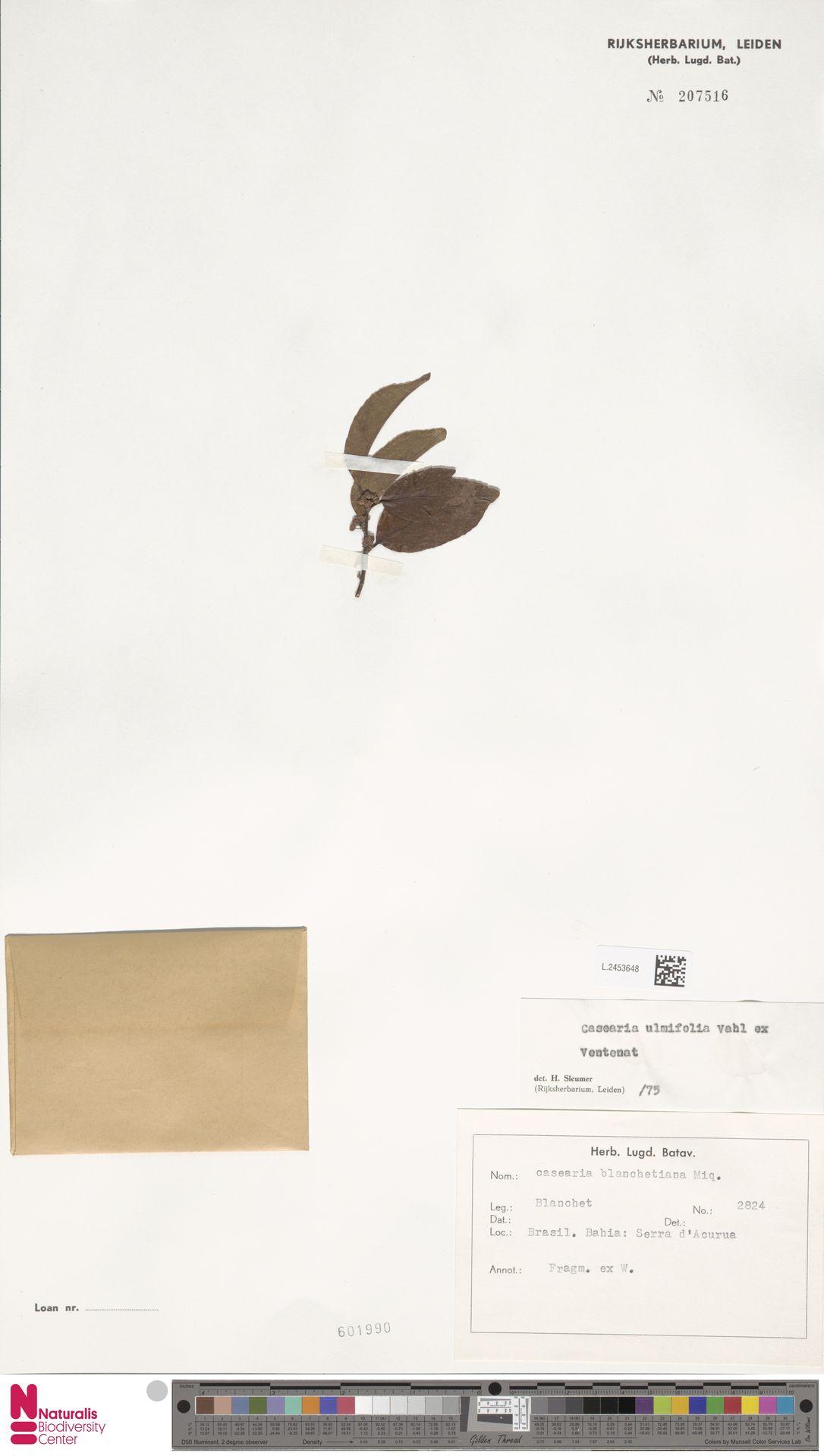 L.2453648 | Casearia ulmifolia Vahl ex Vent.