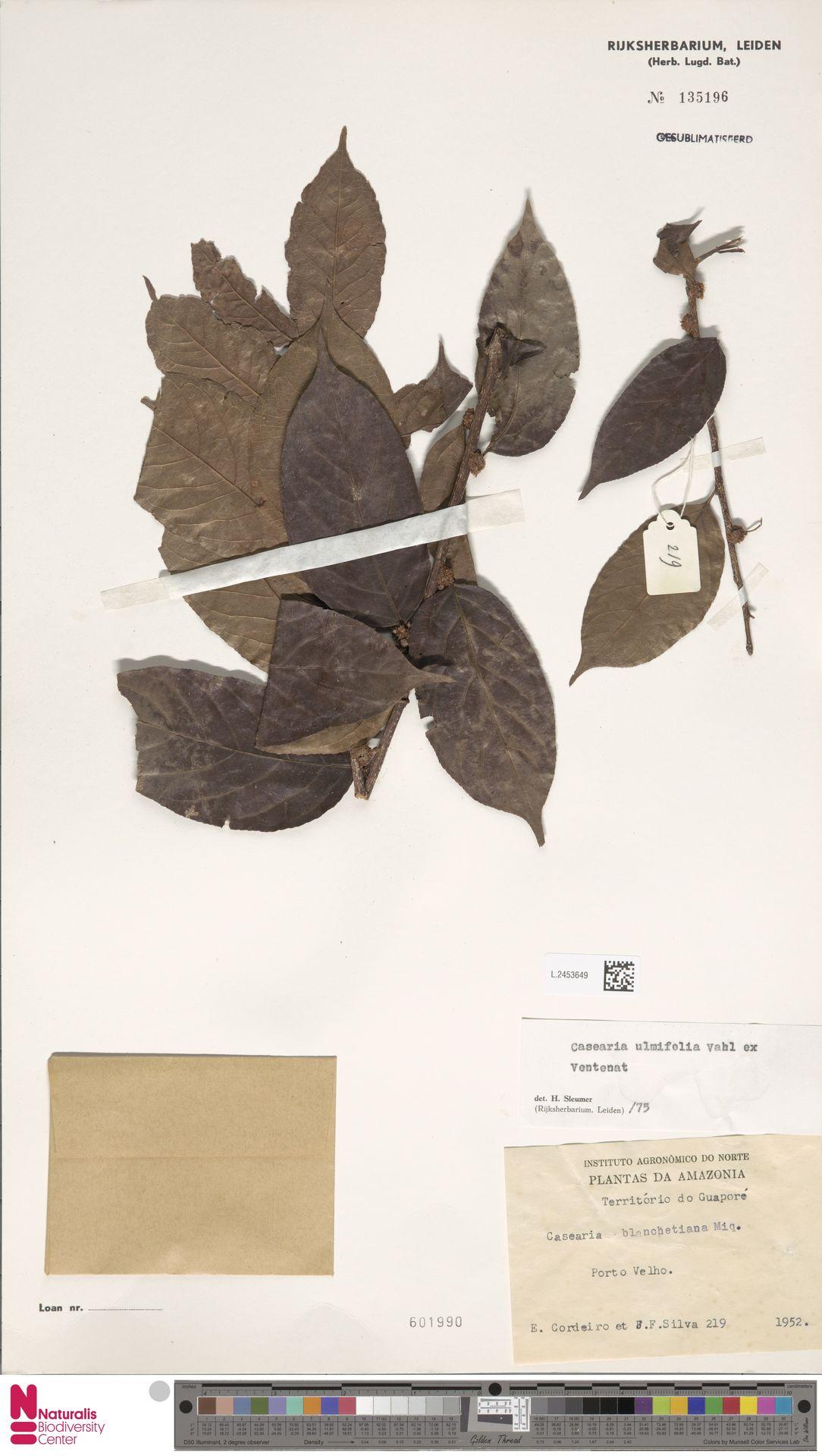 L.2453649 | Casearia ulmifolia Vahl ex Vent.